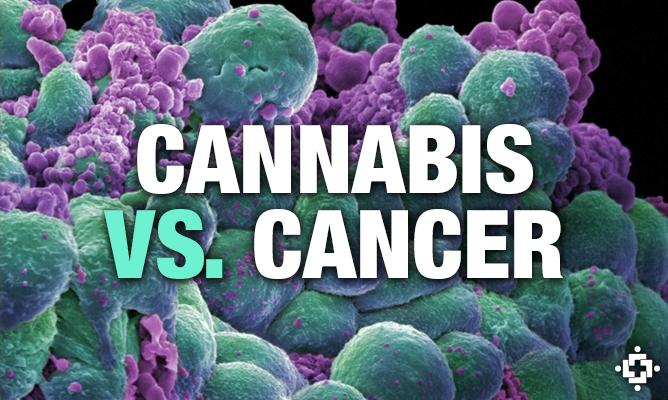 corporate-involvement-in-using-cannabis-medicine-to-treat-cancer